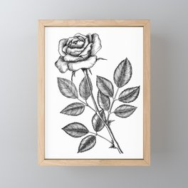 Rose drawing 2 Framed Mini Art Print