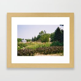Flower Farm 2 Framed Art Print