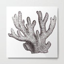 Coral 1 Metal Print