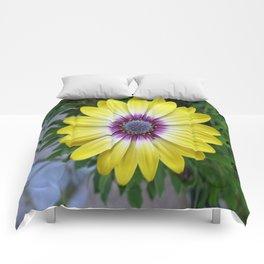 Pretty as Sunshine Comforters