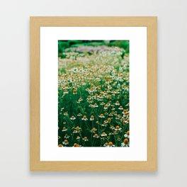 Little White Flowers in a Garden Framed Art Print
