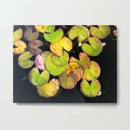 Autumn Lilypads - Fall Colors In A Garden Pond Metal Print