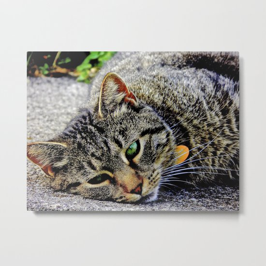 Those Green Eyes Metal Print