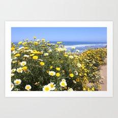 daisies at the ocean road Art Print