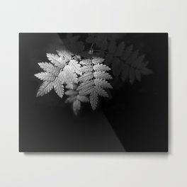 Ferns on Black Metal Print