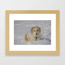Patricia the Snow Dog Framed Art Print