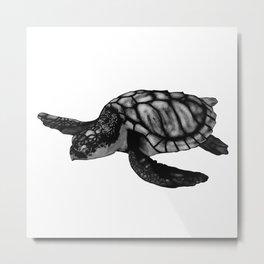 Kemp's Ridley Turtle Metal Print