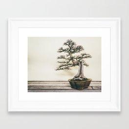 Chinese Elm Bonsai in Winter Framed Art Print