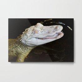 Smiling Albino Alligator Metal Print