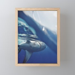 Shark on the Surface Framed Mini Art Print