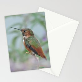 Allen's Hummingbird Sentinel Stationery Cards