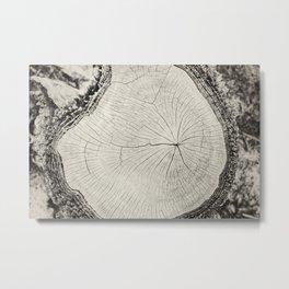 Paperbark Metal Print
