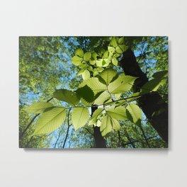 Sunlight Canopy V Metal Print