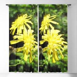 Watercolor Flower Canada Hawkweed 02, Beauty and the Beast, Nova Scotia, Canada Blackout Curtain