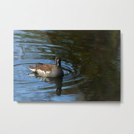 Common Moorhen Metal Print