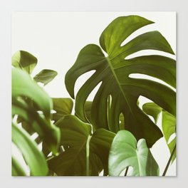 Verdure #5 Canvas Print