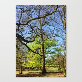 Spring In An English Park Canvas Print