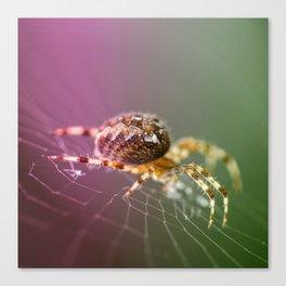 Spidery  Canvas Print