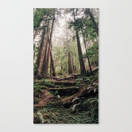 John Muir Woods Canvas Print