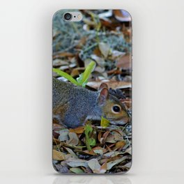 Searching For Food iPhone Skin