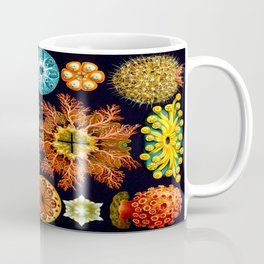 Sea Squirts (Ascidiacea) by Ernst Haeckel Coffee Mug