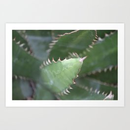 Agave Pads & Spines Art Print