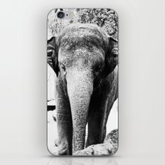 Dangerously Delicate iPhone & iPod Skin