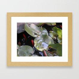 koi, lily pad Framed Art Print