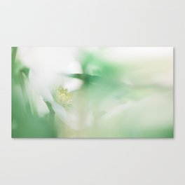 Hellebore and leaves Canvas Print