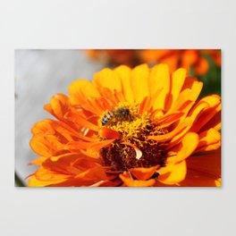 Bee on a Flower Canvas Print