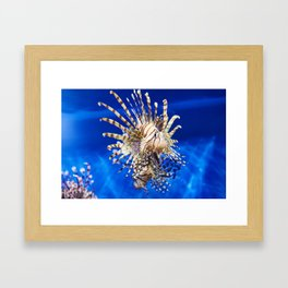 Poisonous lionfish in blue water sea Framed Art Print