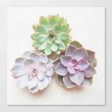 Succulent Trio Canvas Print