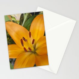 Lilium in Orange Stationery Cards