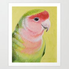 Peach-faced Lovebird Art Print