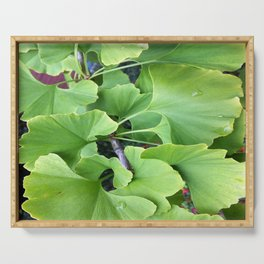 Ginkgo Leaves Serving Tray