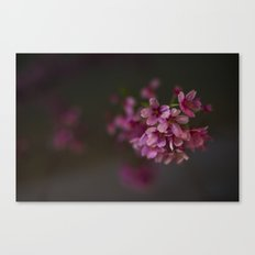 Kyoto Night Sakura, Japan 2015 Canvas Print