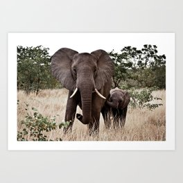 Elephant & Calf Art Print