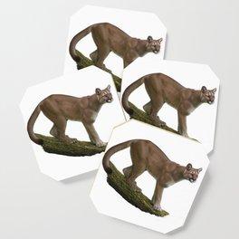Cougar Coaster