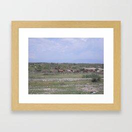 Horses in Haiti Framed Art Print
