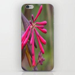 Trumpet Honeysuckle - Buds of Coral Woodbine  iPhone Skin