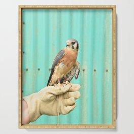 American Kestrel Falcon Bird Wildlife Northwest Serving Tray