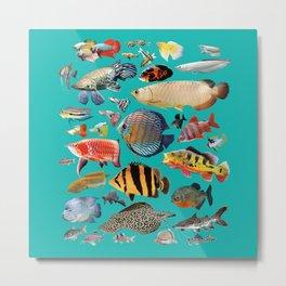 Freshwater tropical fish 2 Metal Print
