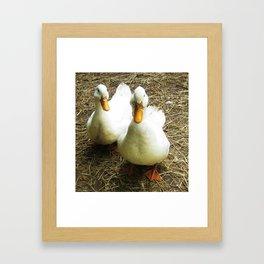 Quack Quack Framed Art Print