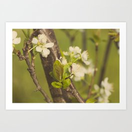 Green blooming tree and the bee Art Print