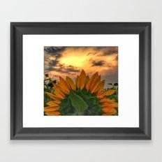 sunflower in the sunset Framed Art Print