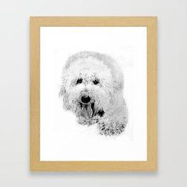Labradoodle Framed Art Print