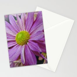 Lavender African Daisy Stationery Cards