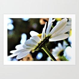 Flower No 4 Art Print