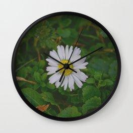 Little wild daisy flower - Camomille  Wall Clock
