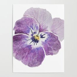 Light Pink Pansy Poster